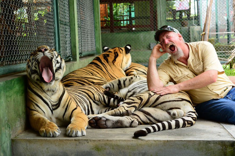 Phuket tiger kingdom lets go taxi tours phuket - Show me a picture of the tiger ...